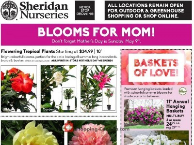 Sheridan Nurseries Outdated Flyer Thumbnail