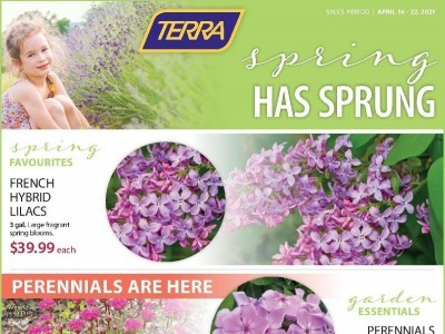 Terra Green Houses Flyer Thumbnail